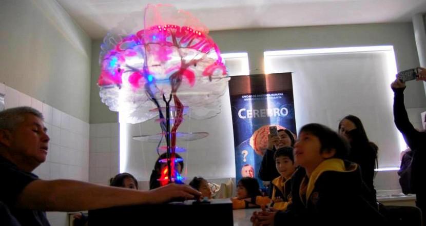 Charla sobre neurociencia inaugurará Seminario de Educadoras de Párvulos