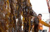 UA apoyará a pescadores de Mejillones en proyectos sustentables