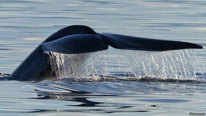 Acidificación del océano: una amenaza actual y futura