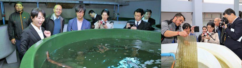 Delegación japonesa visitó la UA por proyecto sobre Marea Roja