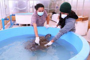 Personal del Centro de Rescate trabaja en el cuidado de las tortugas.